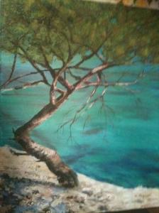 pin au bord de mer